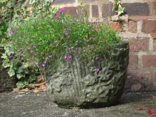 [Picture: Flowerpot]