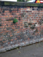 [Picture: brick wall 2]