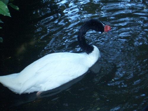 [Picture: Ugly bird in swirly water 2]