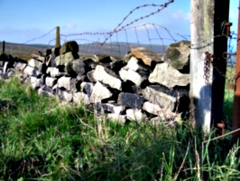 [picture: Dry stone wall with barbed wire]