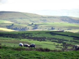 [picture: Panorama - Sheep-covered hills: 6]