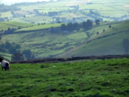 [picture: Panorama - Sheep-covered hills: 18]