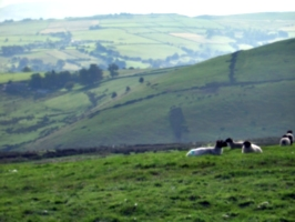 [picture: Panorama - Sheep-covered hills: 20]