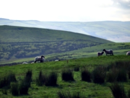 [picture: Panorama - Sheep-covered hills: 31]