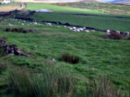 [picture: Panorama - Sheep-covered hills: 37]