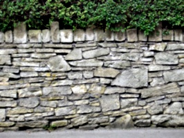 [picture: Stone wall with box hedge]