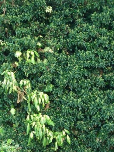 [Picture: Bush texture]