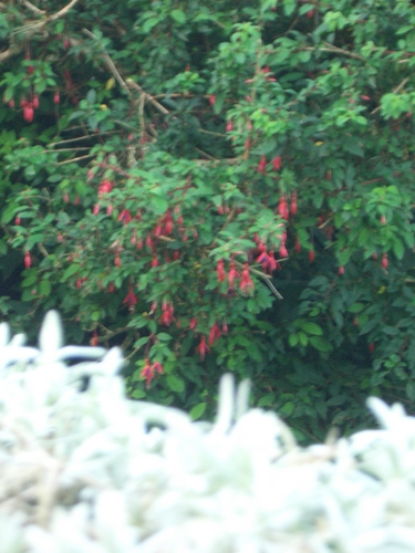 [Picture: Blurry plants]