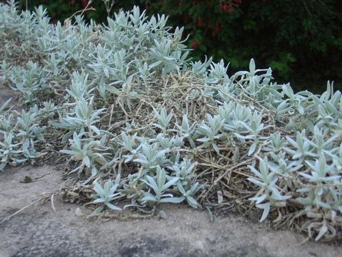 [Picture: Plants]