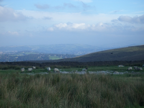 [Picture: Panorama - Sheep-covered hills: 3]