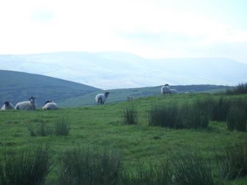 [Picture: Panorama - Sheep-covered hills: 4]
