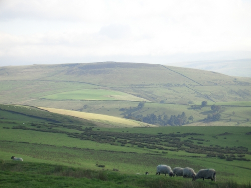 [Picture: Panorama - Sheep-covered hills: 5]