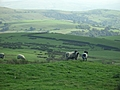 [Picture: Panorama - Sheep-covered hills: 7]