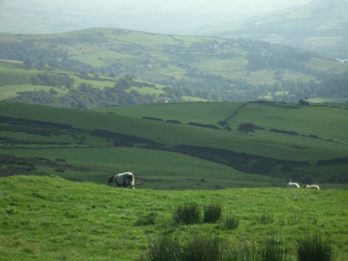 [Picture: Panorama - Sheep-covered hills: 10]