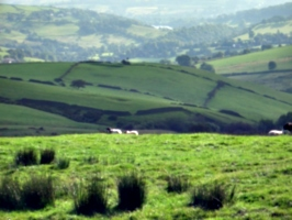 [Picture: Panorama - Sheep-covered hills: 12]