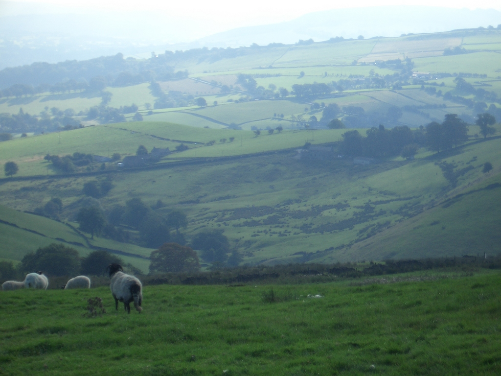 [Picture: Panorama - Sheep-covered hills: 16]
