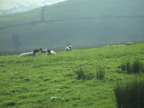 [Picture: Panorama - Sheep-covered hills: 21]