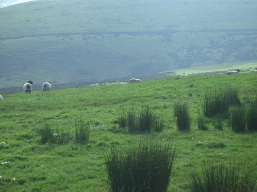 [Picture: Panorama - Sheep-covered hills: 23]