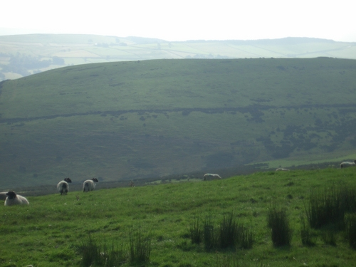 [Picture: Panorama - Sheep-covered hills: 24]