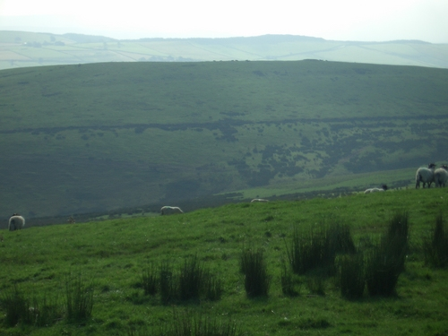 [Picture: Panorama - Sheep-covered hills: 26]
