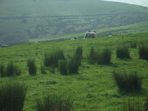 [Picture: Panorama - Sheep-covered hills: 27]