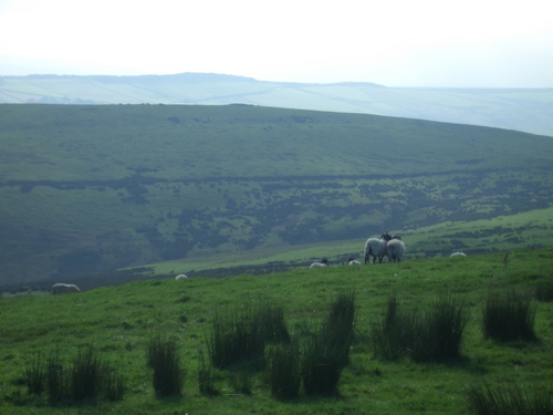 [Picture: Panorama - Sheep-covered hills: 28]