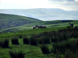 [Picture: Panorama - Sheep-covered hills: 33]