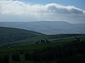 [Picture: Panorama - Sheep-covered hills: 34]