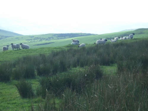 [Picture: Panorama - Sheep-covered hills: 35]