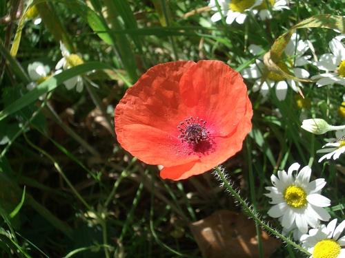 [Picture: Poppy]