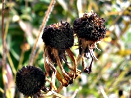 [picture: Seed ball 2]