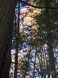 [Picture: Autumn Trees 1]