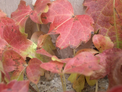 [Picture: Autumn Leaves 2]