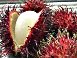 [picture: Rambutan Fruit 4]
