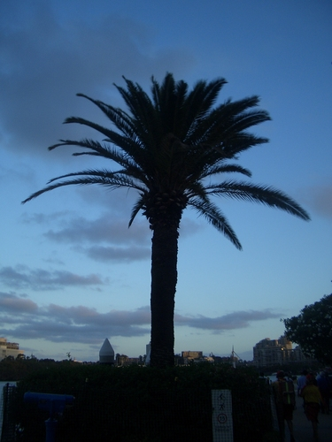 [Picture: Palm tree]