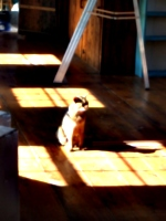 [picture: Marzipan the cat in the sun 1]