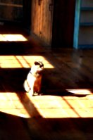 [picture: Marzipan the cat in the sun 2]