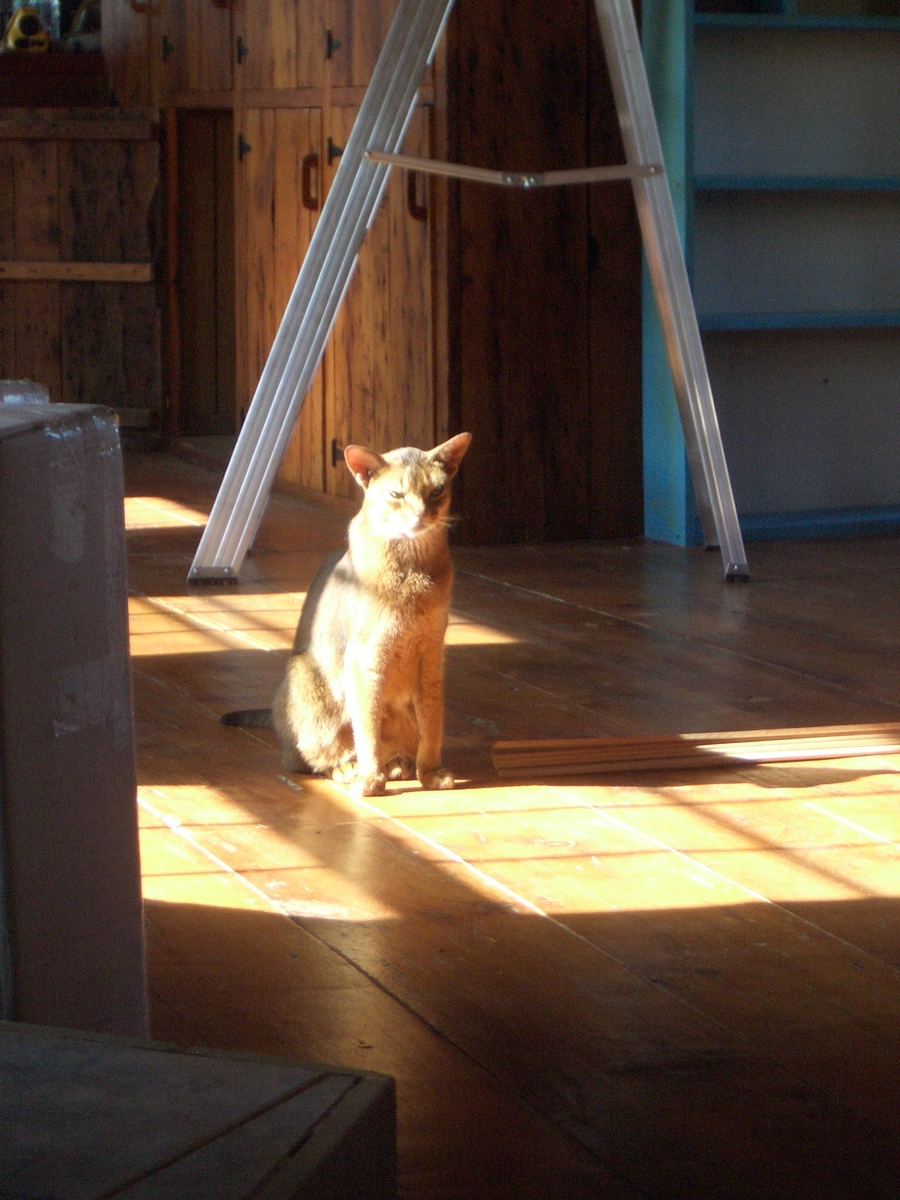[Picture: Marzipan the cat in the sun 3]