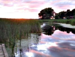 [picture: Lake Ontario Reeds at Sunset]