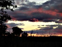 [picture: Lake Ontario Reeds at Sunset 4]