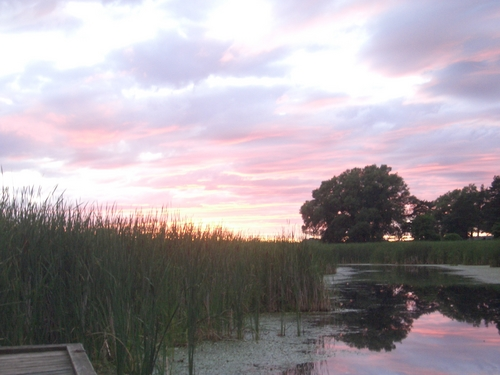 [Picture: Lake Ontario Reeds at Sunset 2]