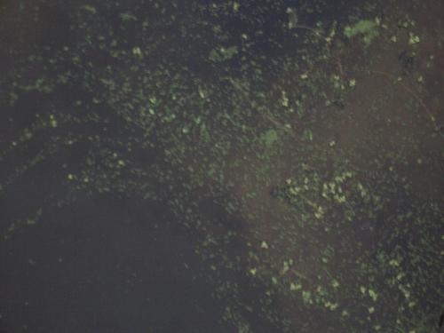 [Picture: Pond scum texture]