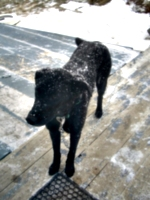 [picture: Rueben the Dog in the Snow 2]