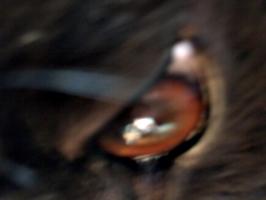 [picture: Devil dog eye]