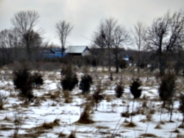[picture: Our house from our back field]