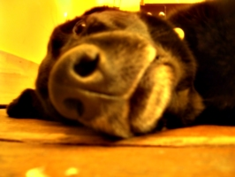 [picture: Dog nose 3]