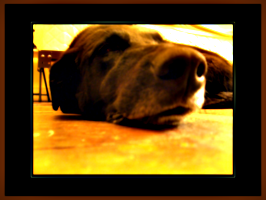 [picture: Dog nose 5]