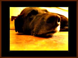 [picture: Dog nose 6: Morose Dog]