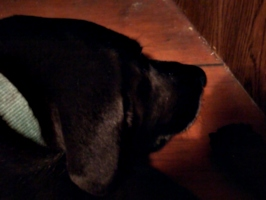[picture: Dog's Head 3]