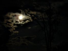 [picture: Moon, Clouds, Tree]